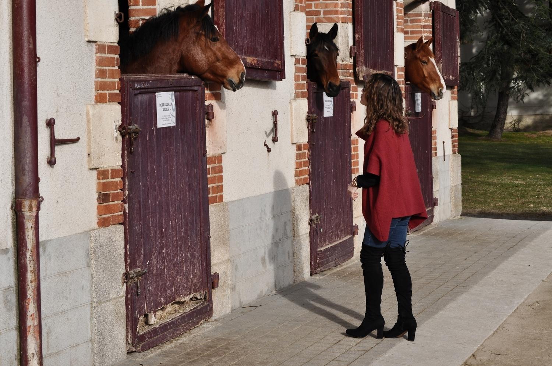 happiness-coco-je-murmure-a-l'oriel-des-chevaux-3