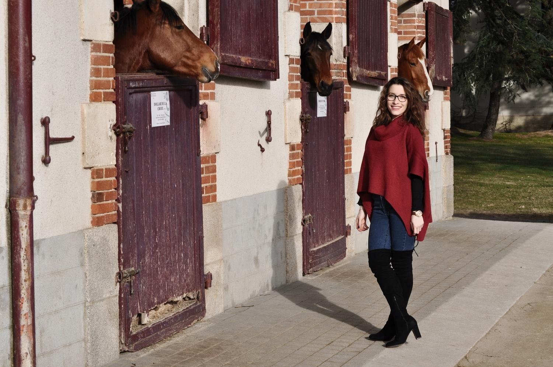 happiness-coco-je-murmure-a-l'oriel-des-chevaux-4